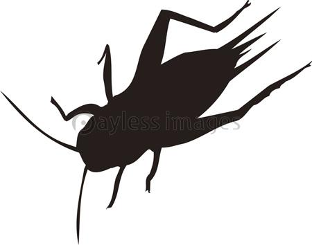 コオロギの画像 p1_20