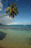An+overhanging+palm+tree+on+a+beach%2C+Moorea%2C+Tahiti%2C+French+Polynesia%2C+South+Pacific