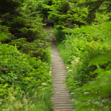 Path+of+stairs+in+forest%2C+Pacific+Rim+Park%2C+Vancouver+Island%2C+Canada