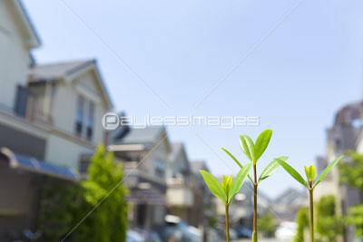 新芽と住宅街の写真イラスト素材 Gf1950584312 ペイレスイメージズ
