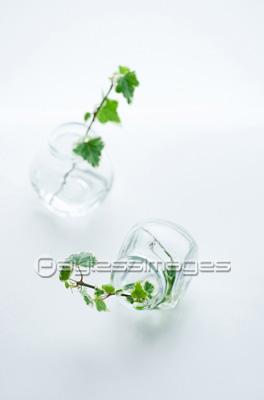 ガラス瓶に生けたアイビーの写真イラスト素材 Gf0640066154
