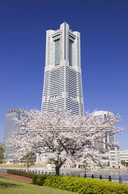 桜とランドマークタワーの写真イラスト素材 Gf1760087594 ペイレス