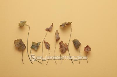 枯れ葉の写真イラスト素材 Gf1940122809 ペイレスイメージズ