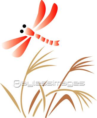 赤とんぼの写真イラスト素材 Gf2200145261 ペイレスイメージズ
