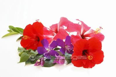 南国の花 ストックフォトの定額制ペイレスイメージズ