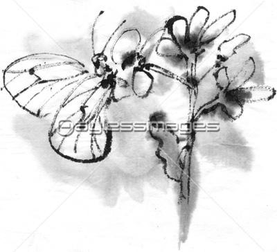 モンシロチョウの写真イラスト素材 Gf2200304967 ペイレスイメージズ