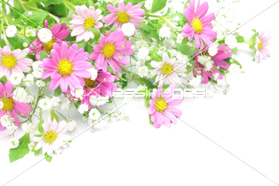 菊とかすみ草の写真イラスト素材 Xf1475063898 ペイレスイメージズ