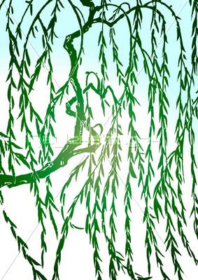 枝垂れ柳の写真イラスト素材 写真素材ストックフォトの定額制