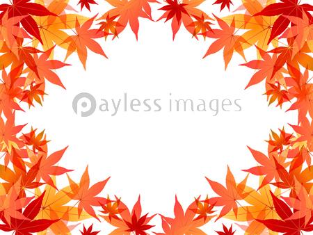 紅葉 もみじ 背景の写真イラスト素材 Xf3115163649 ペイレスイメージズ