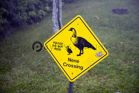 ネネ注意の看板、カウアイ島、ハワイ