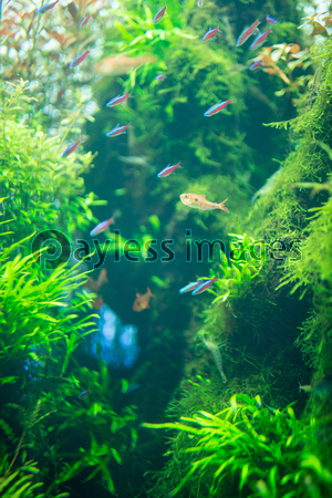 Aquariumの写真イラスト素材 Xf5385179323 ペイレスイメージズ