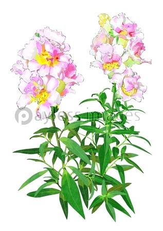 4月の花の写真イラスト素材 写真素材ストックフォトの定額制ペイレス