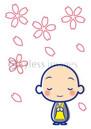 桜 お坊さんの写真イラスト素材 Xf4845211683 ペイレスイメージズ