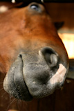Funny+horse+portrait+with+mouth+close+to+camera