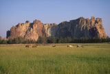 Horses+Grazing+In+A+Green+Grassy+Field+In+The+Rugged+Country