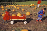 Kids+Pulling+a+Wagon+full+of+Pumpkins