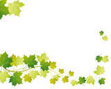 green maple background