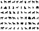 Big+collection+vector+silhouettes+of+dogs+with+breeds+description